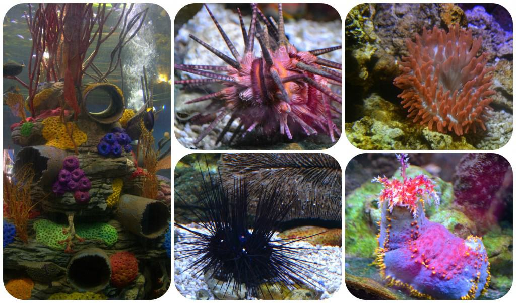 SeaLife2