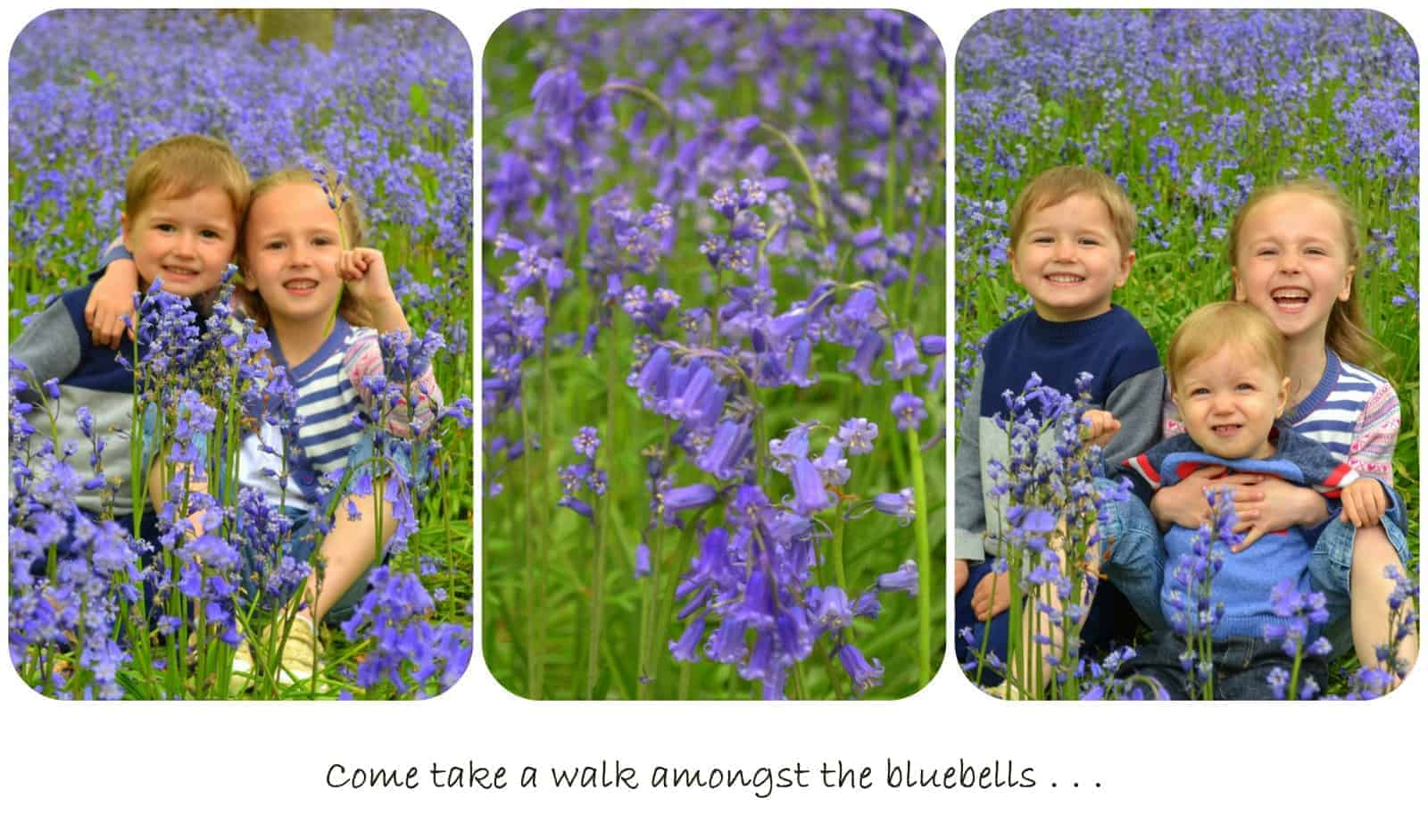 A walk in the bluebells at Rutland Water, May Day 2014