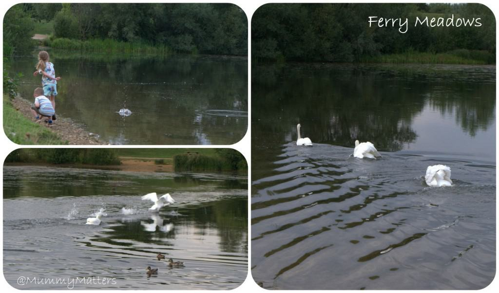 Ferry Meadows