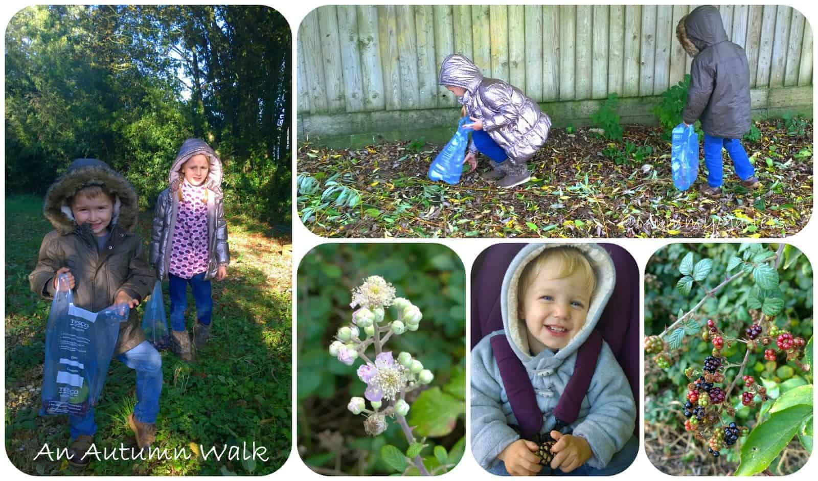 Look what we found on our Autumn walk!