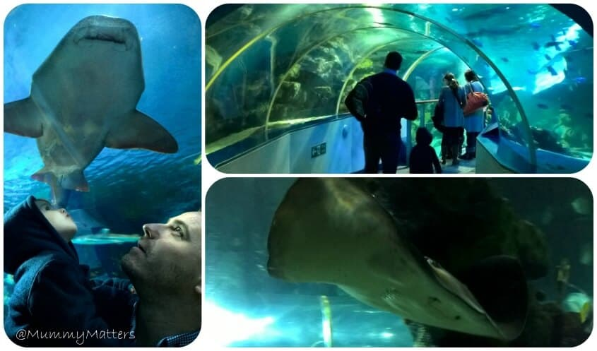 #AncientOceans Sea Life Birmingham