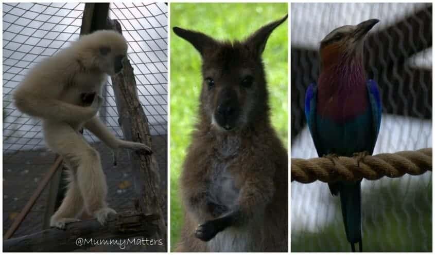 Hamerton Zoo