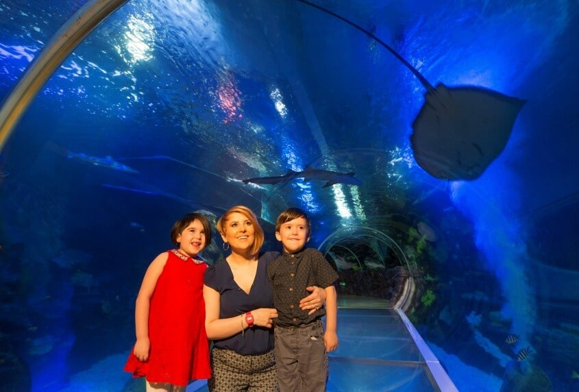 The UK's only 360 degree Ocean Tunnel at The National Sea Life Centre Birmingham resized