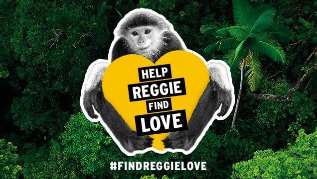 #findreggielove