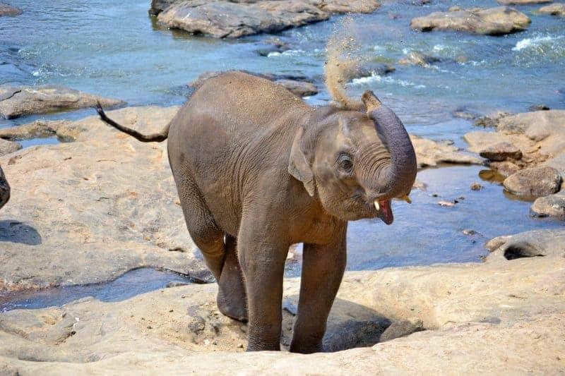 baby-elephant-267124