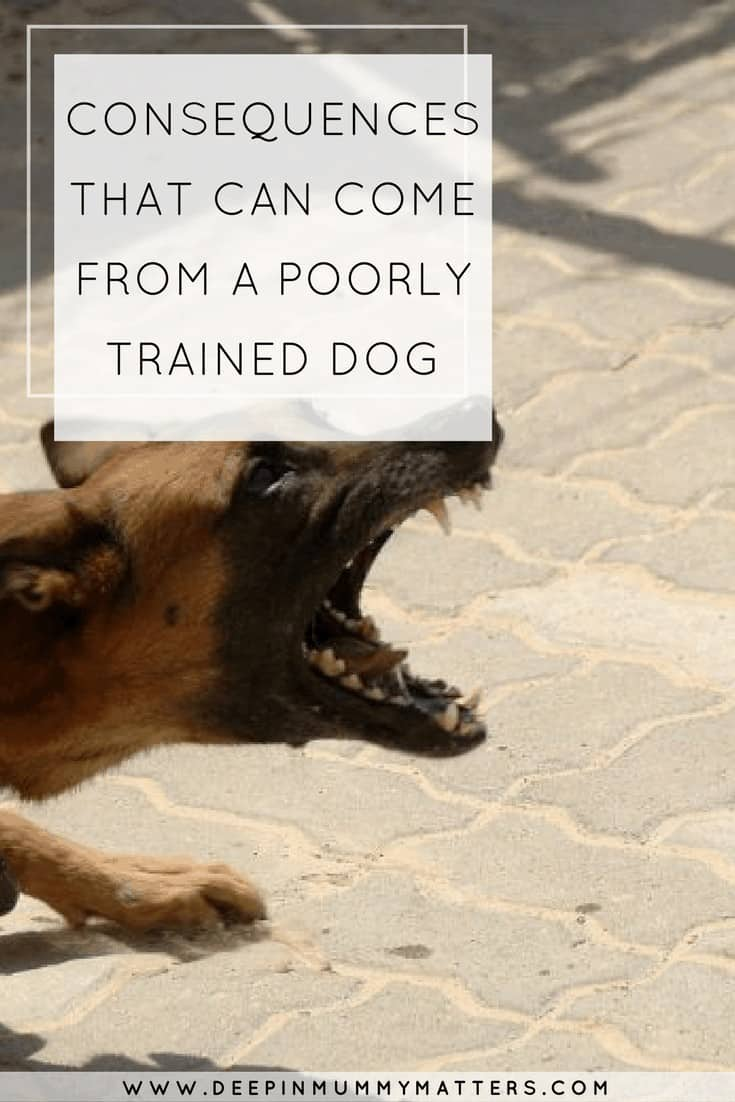 CONSEQUENCES THAT CAN COME FROM A POORLY TRAINED DOG