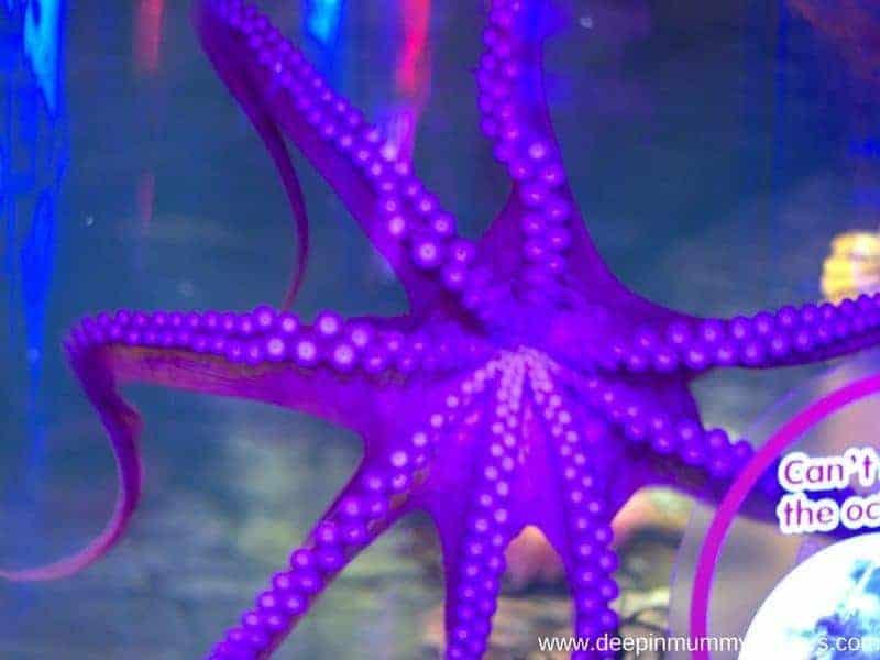 Sea Life Centre Birmingham