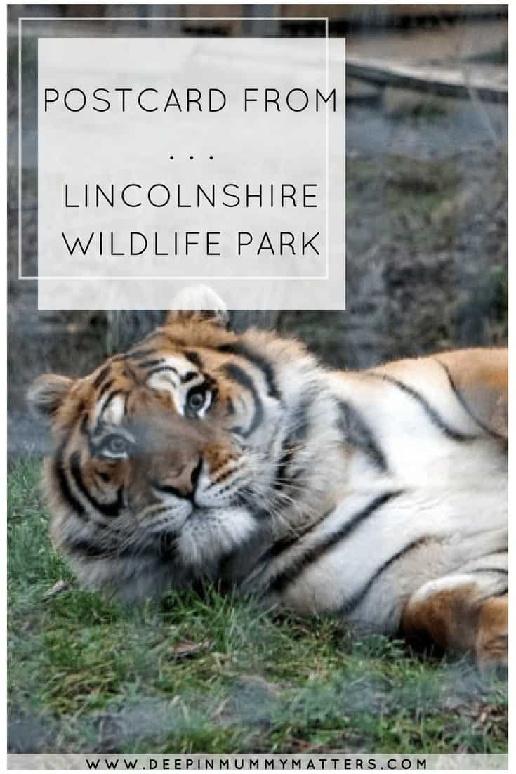 POSTCARD FROM . . . LINCOLNSHIRE WILDLIFE PARK