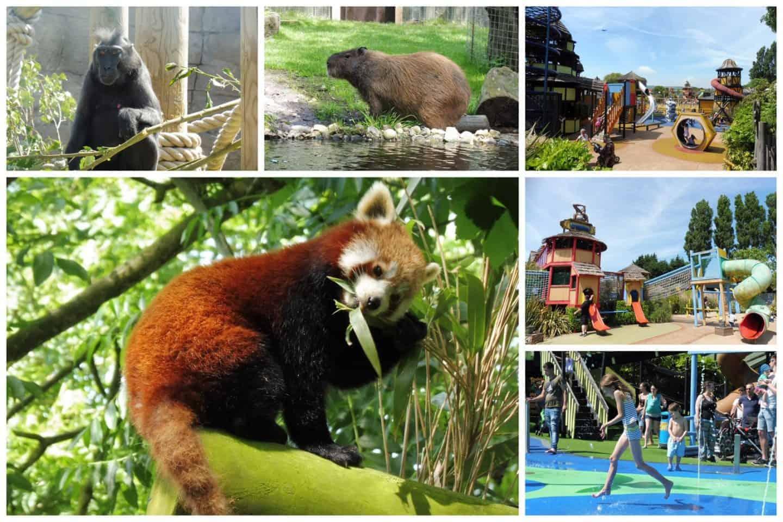Drusillas Park Zoo