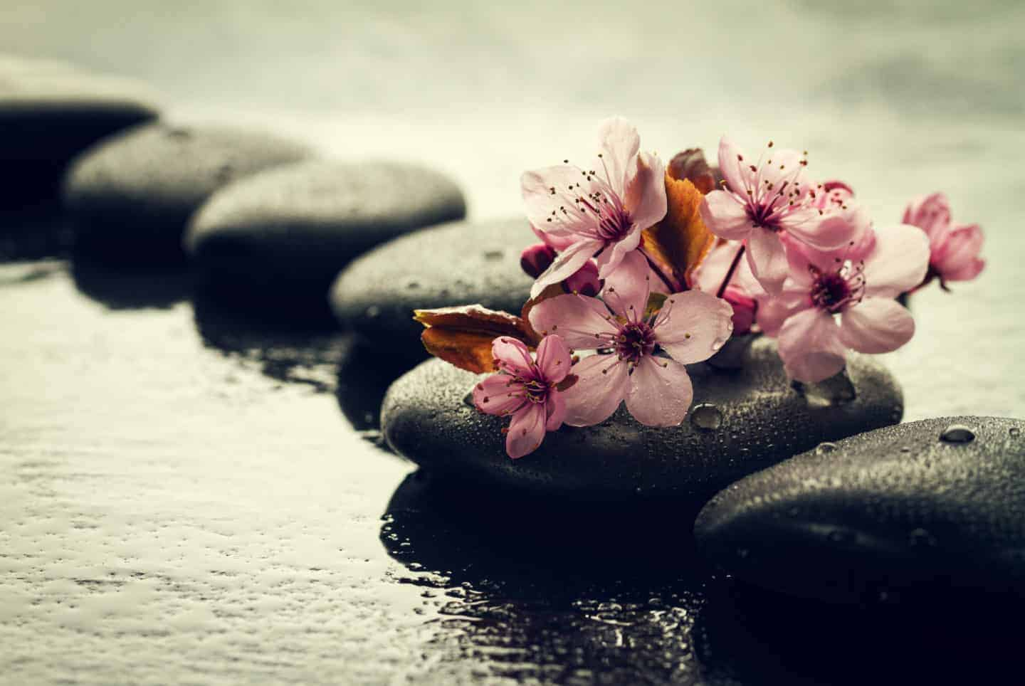 Beautiful pink Spa Flowers on Spa Hot Stones on Water