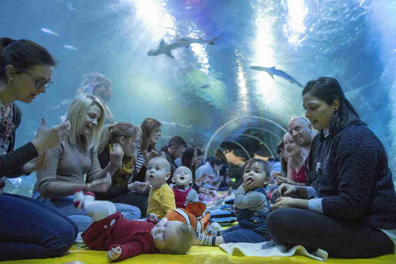 baby sensory at Sealife