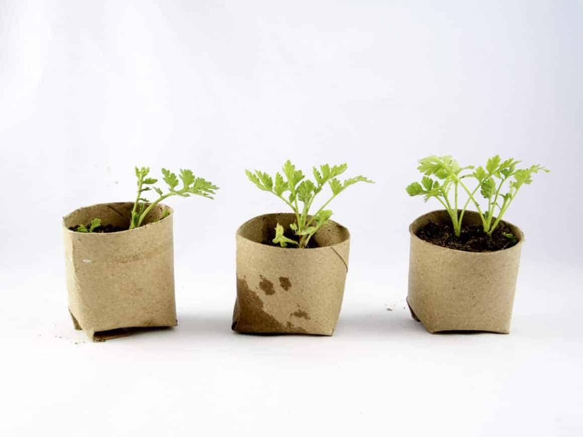 Biodegradable flower pots