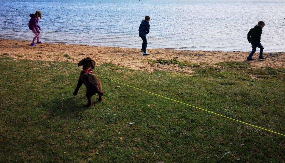 Summer holidays for the whole family – including the dog!