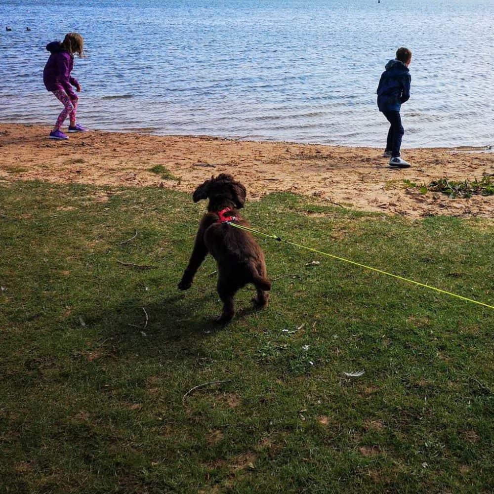 Dog friendly holidays