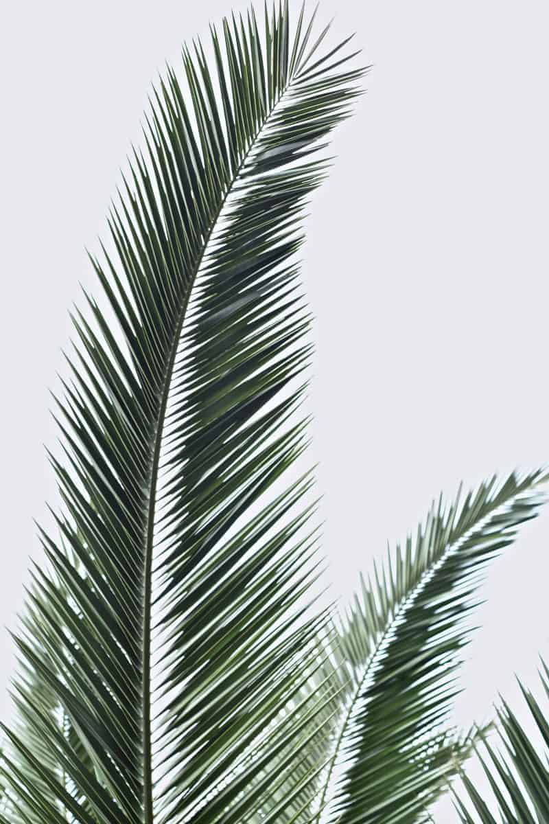 Palm imagery