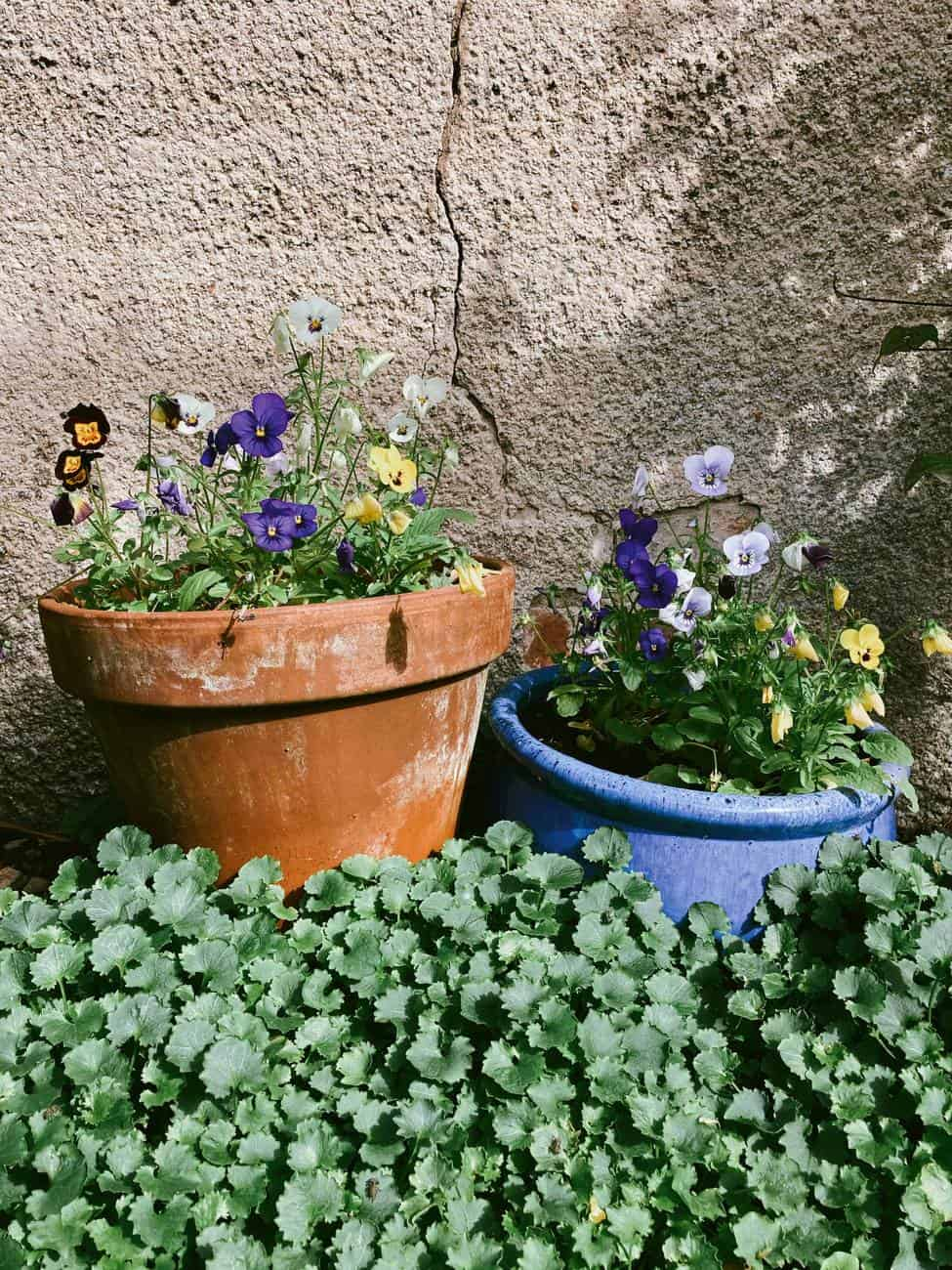 Here are 5 ways for gardening with kids!