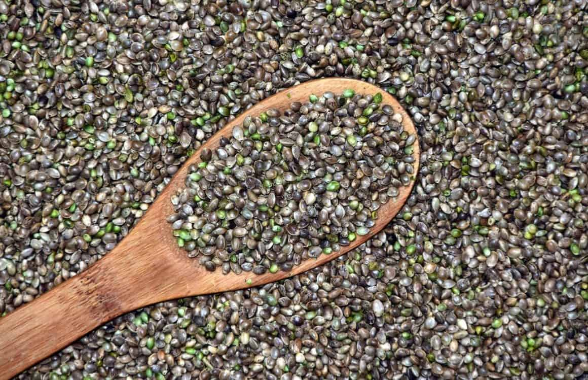 The best reasons why you should eat cannabis seeds