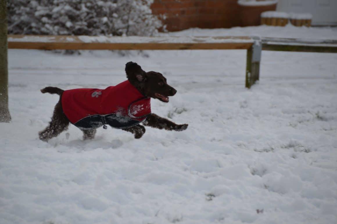 5 Winter Dog Walking Tips #ad 3