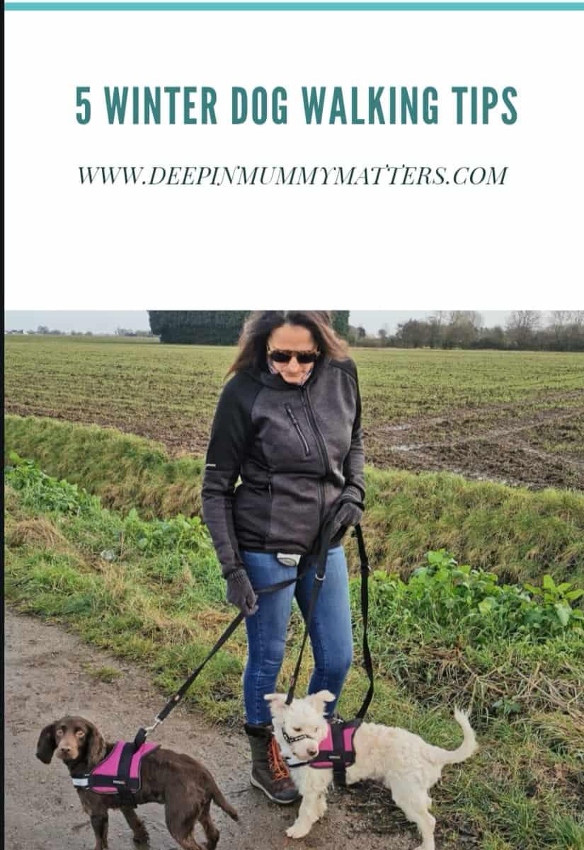 5 Winter Dog Walking Tips #ad 6