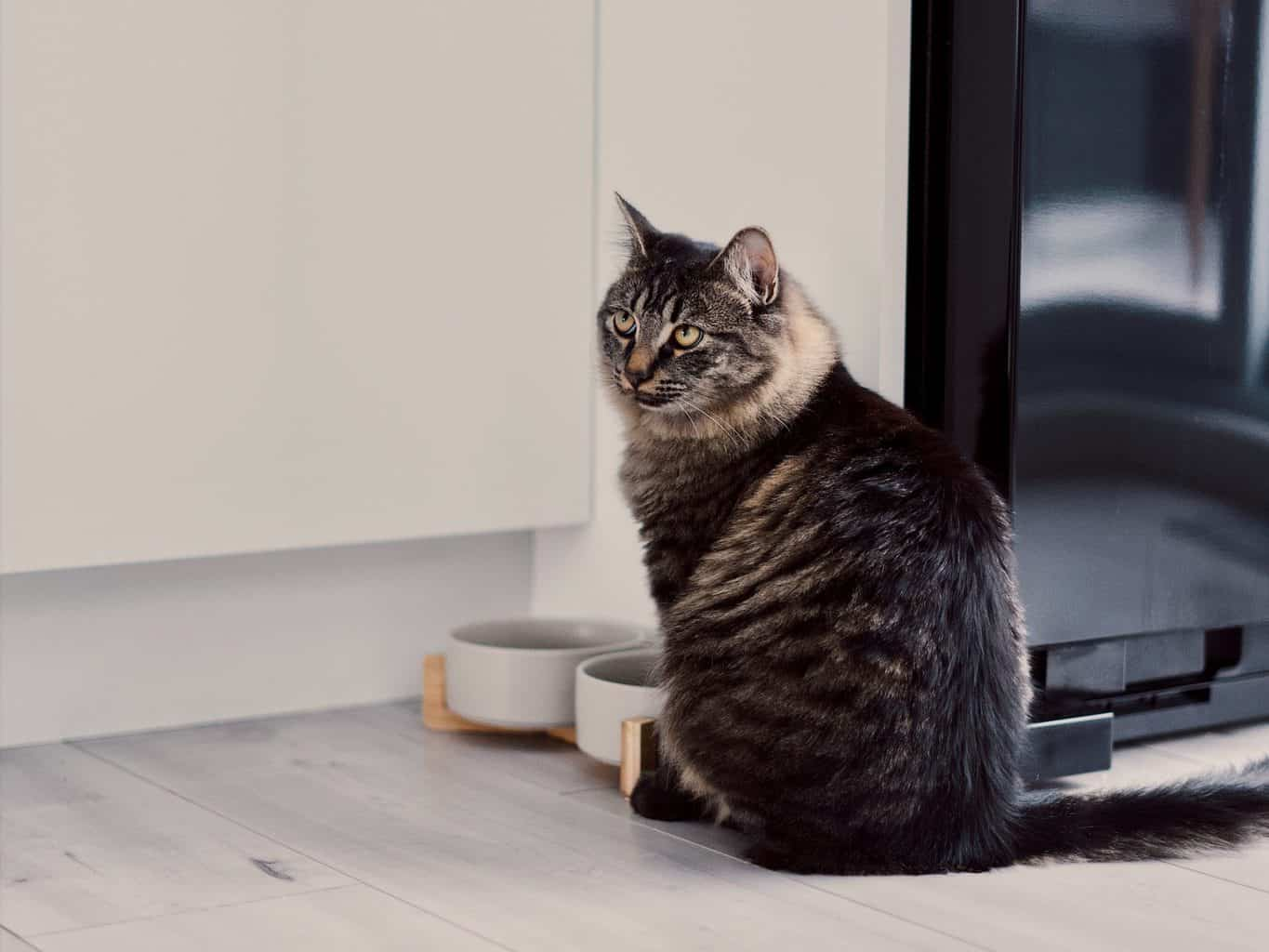 Three Tips to Make an Obese Cat Lose Weight