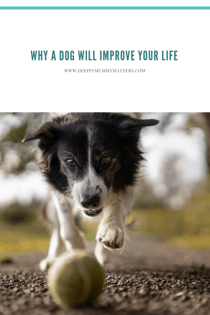 Why A Dog Will Improve Your Life 1