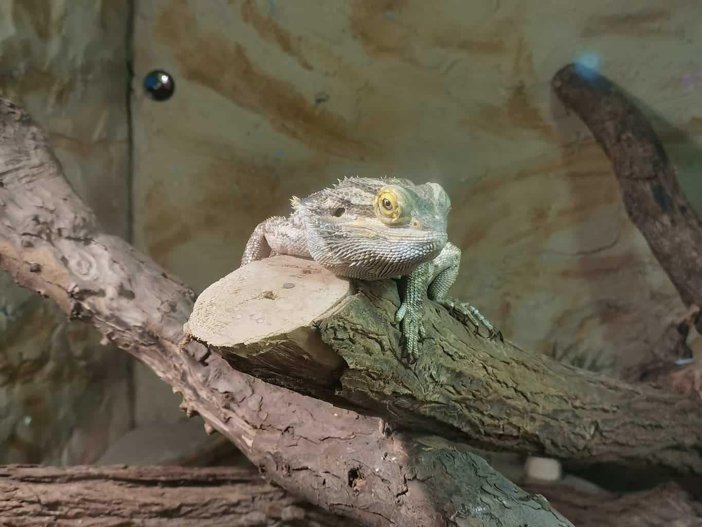 5 Factors to Consider Before Adopting Exotic Pets