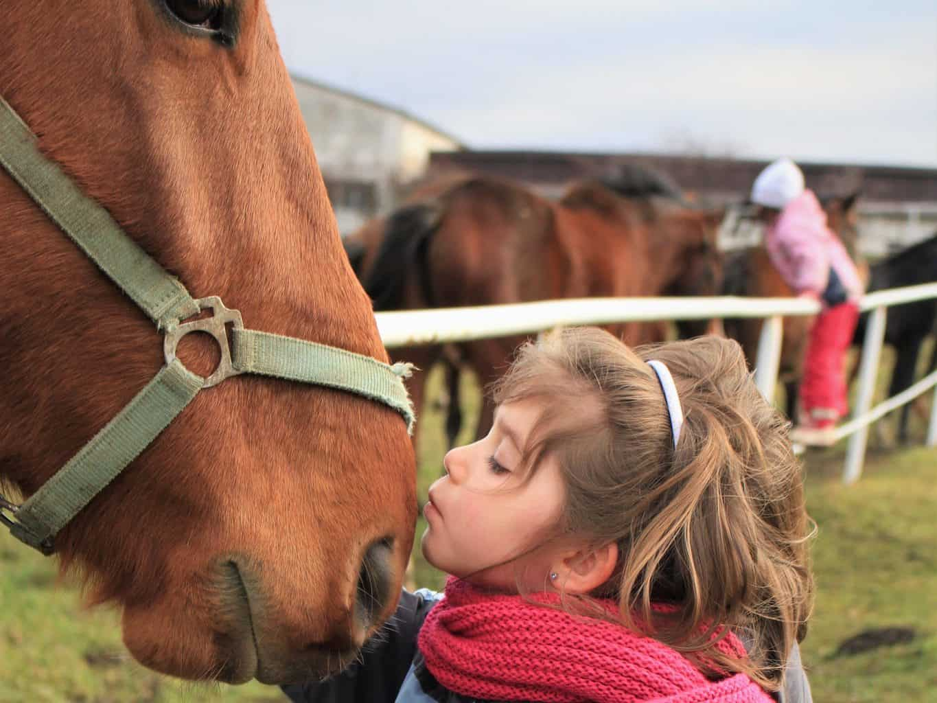 How To Help Your Child Become A Good Horse Owner