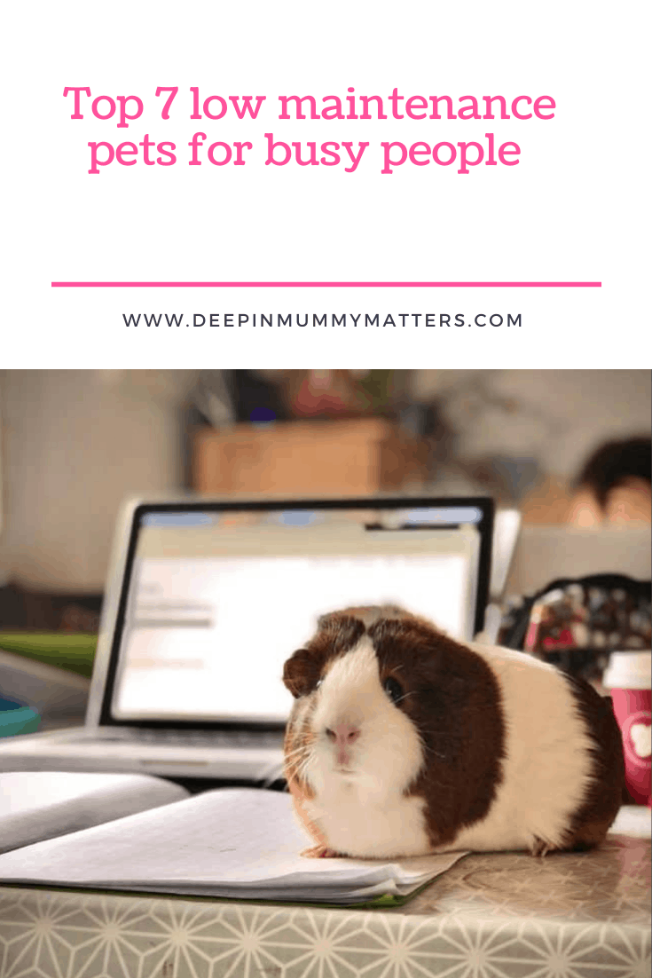 Top 7 Low Maintenance Pets For Busy People 1