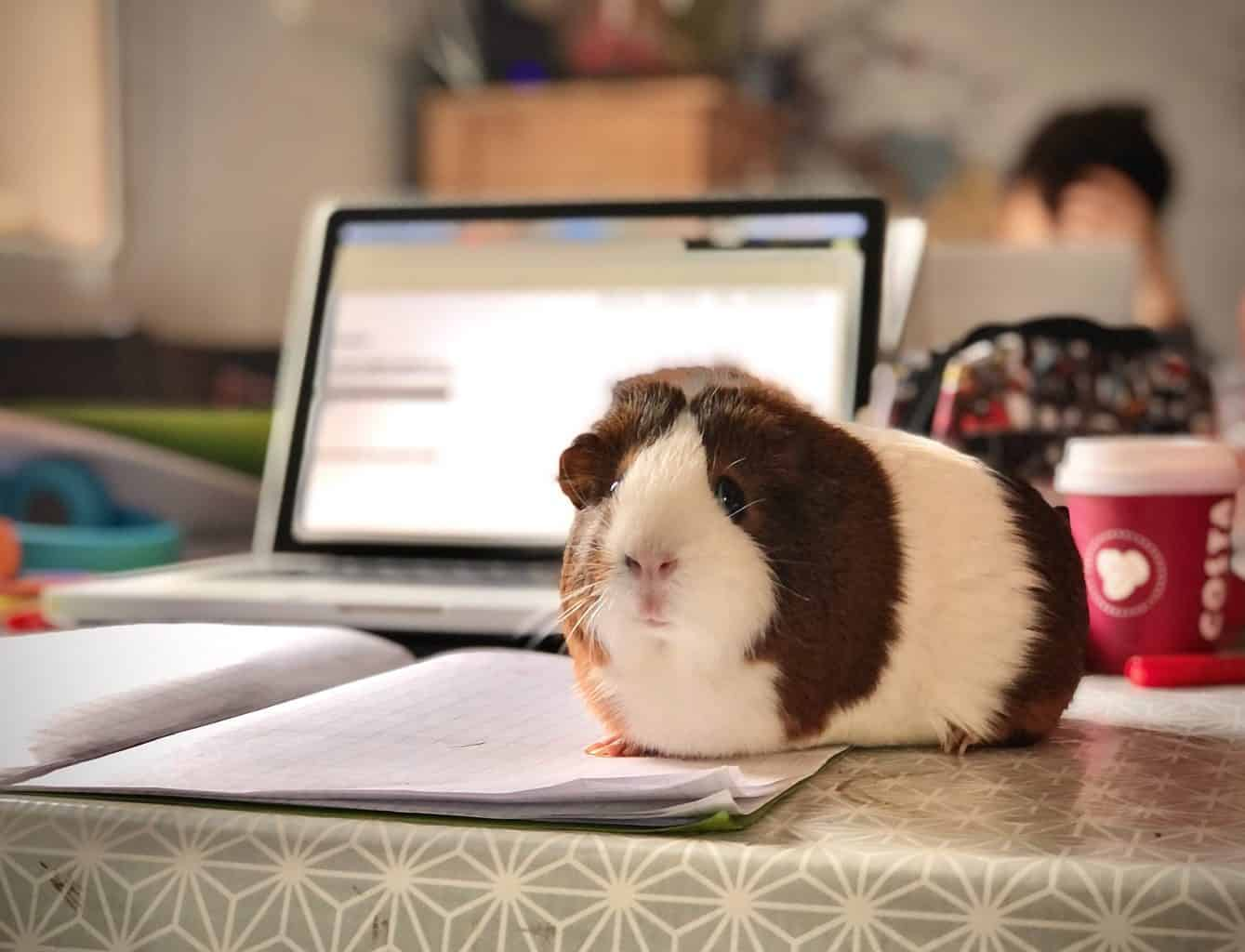Top 7 Low Maintenance Pets For Busy People