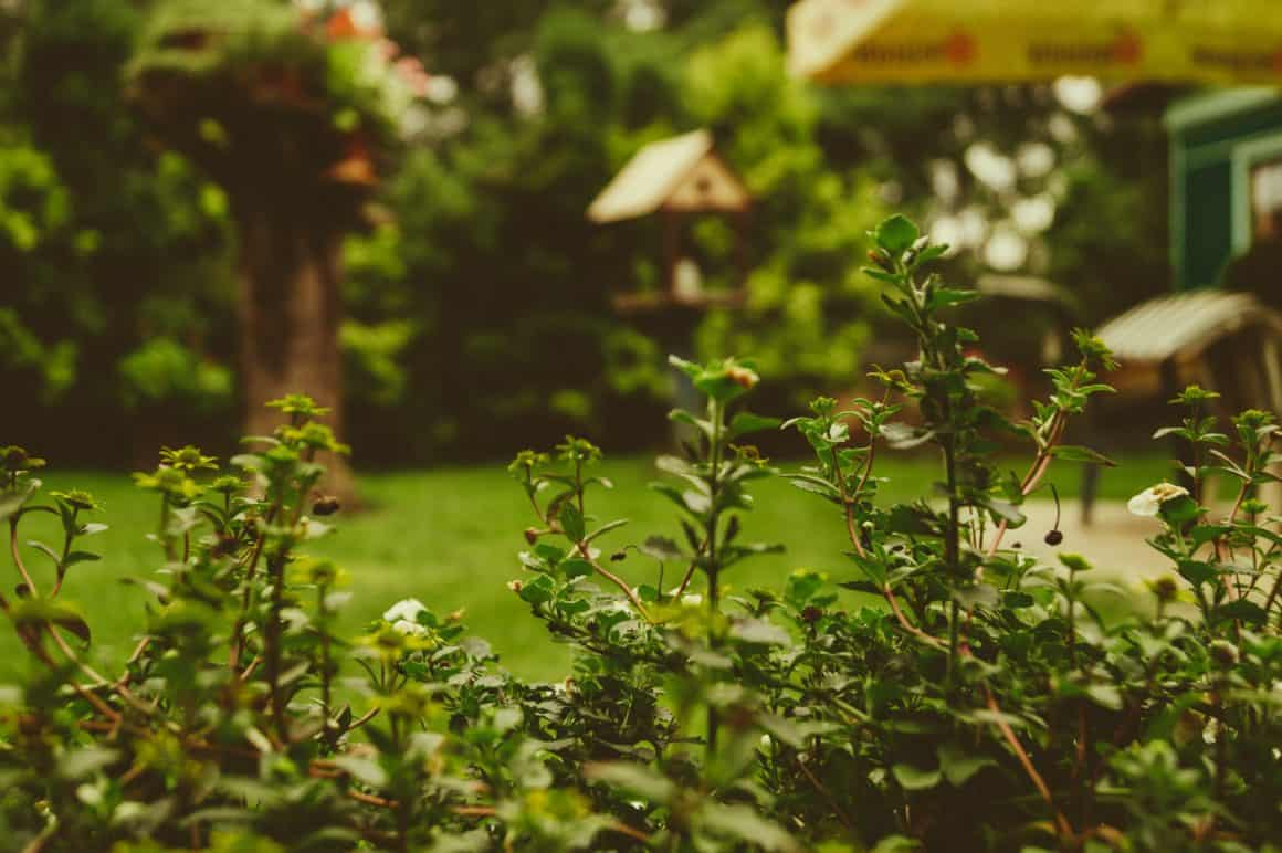 Preparing Your Family Garden for Spring and Summer 1