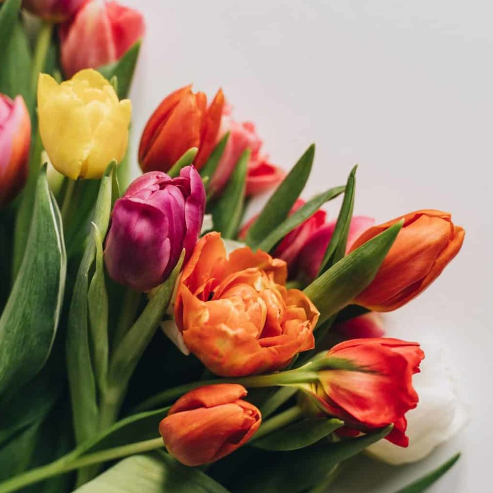 How to Care for Your Bouquet of Tulips