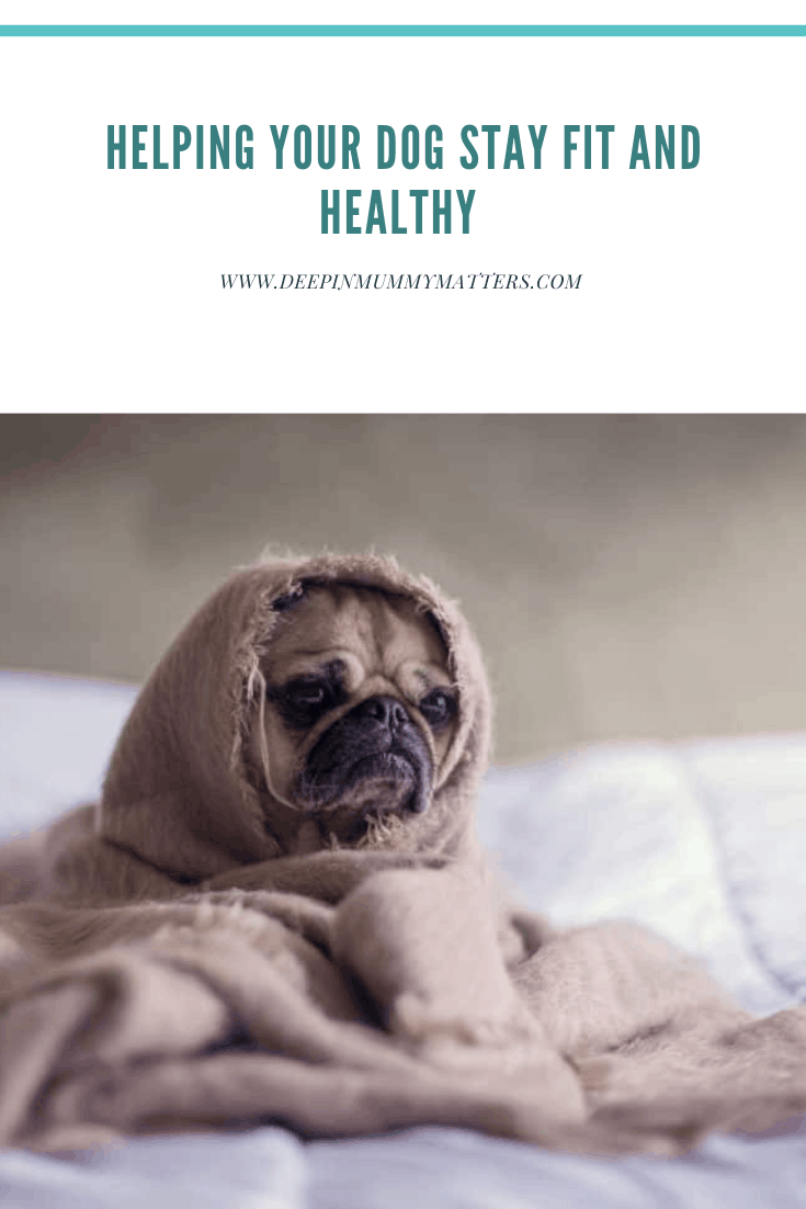 Helping Your Dog Stay Fit and Healthy 1