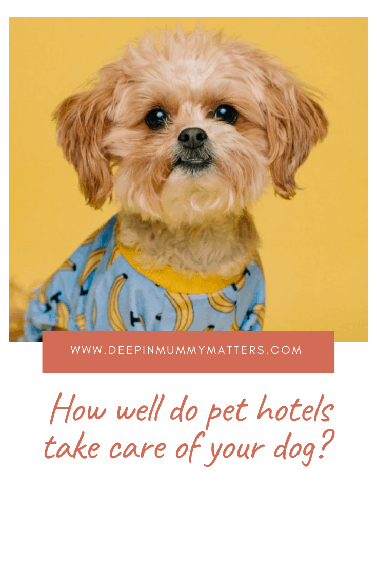 How Well do Pet Hotels Take Care of Your Dog? 1