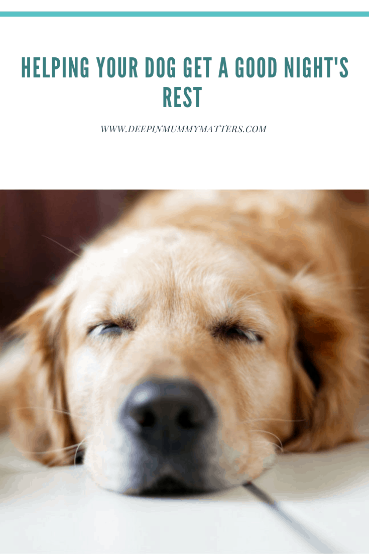 Helping your dog get a good night's rest 2