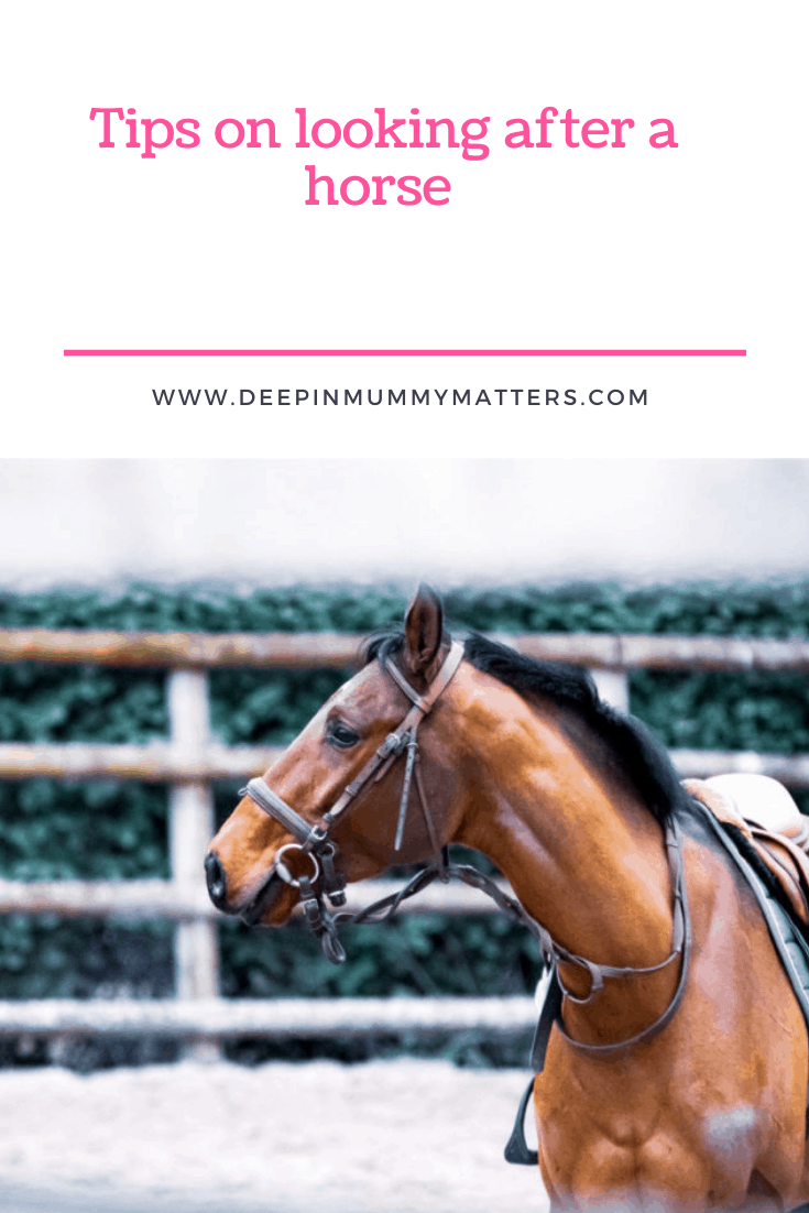 Tips On Looking After A Horse 1