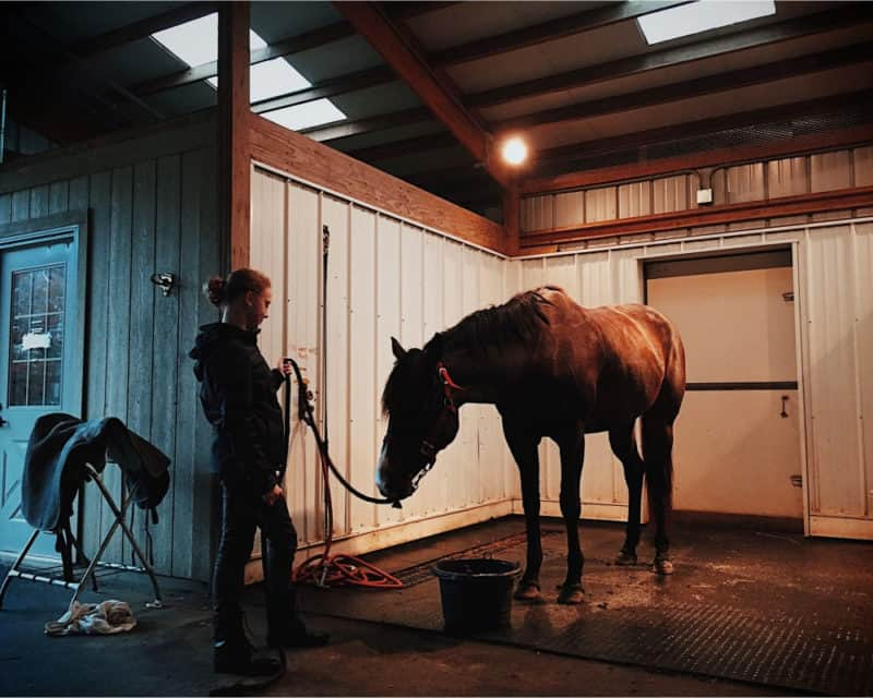 Tips On Looking After A Horse
