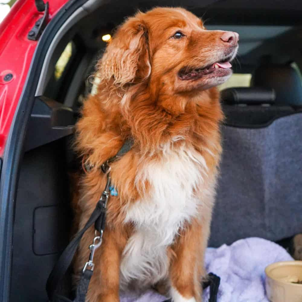 6 Simple Ways to Pet-Proof Your Vehicle