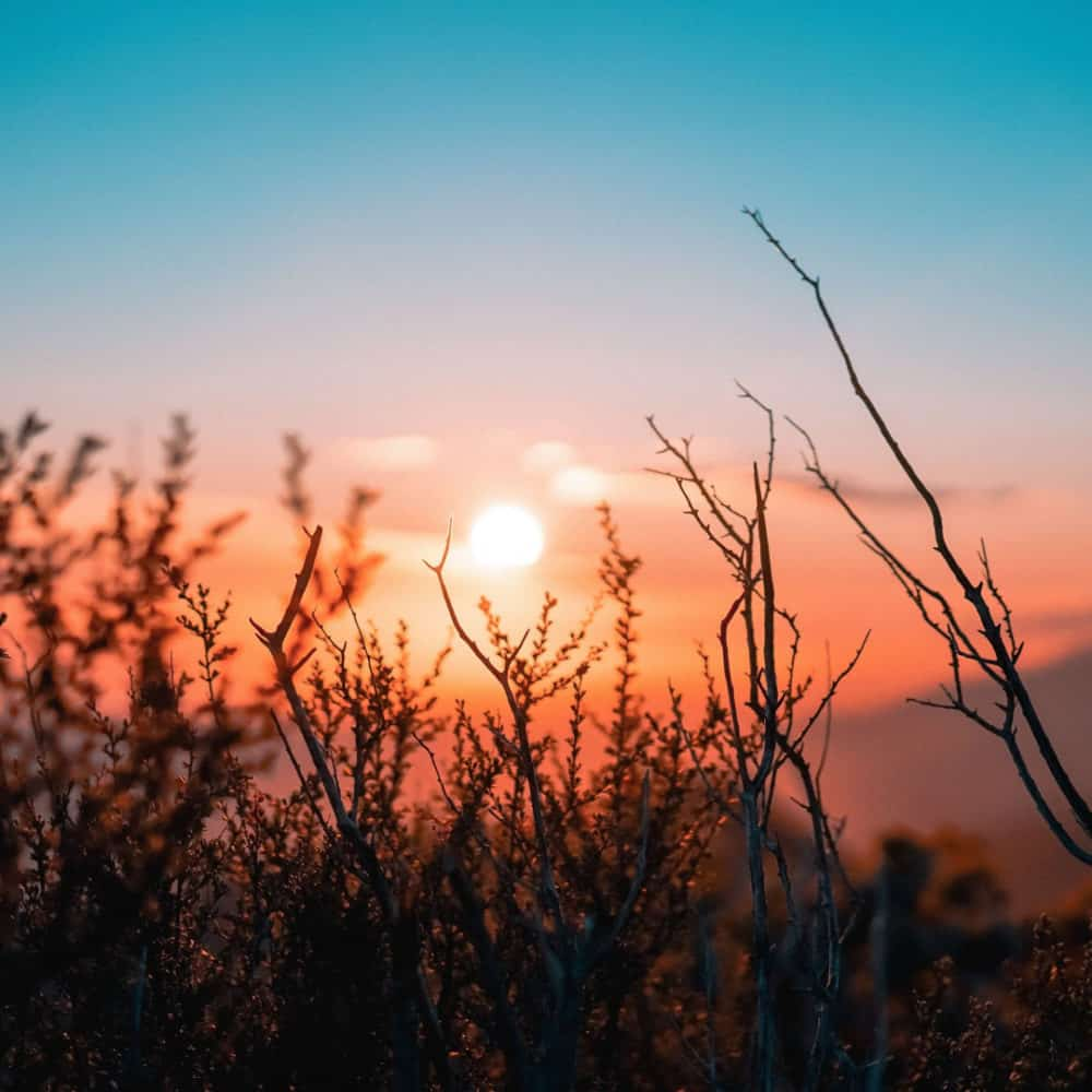 If you want to become an early riser, read on to discover 10 amazing benefits of rising early – these are sure to give you the motivation you need to change your alarm tomorrow morning!